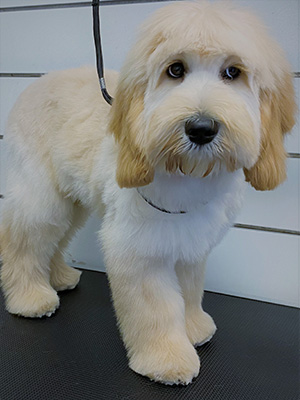 Puppy getting ready for a wash and blow dry